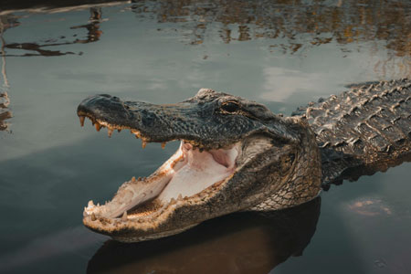 scary ugly crocodile picture
